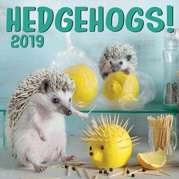 Hedgehogs 2019 Wall Calendar by Zebra Publishing