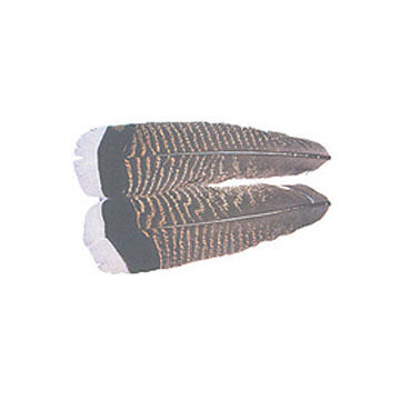 Wapsi Turkey Tail Feather Fly Tying Material - 2 Pk.