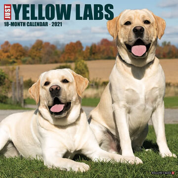 Willow Creek Press Just Yellow Labs 2021 Wall Calendar