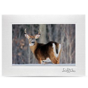 Lori A. Davis Photo Card - Whitetail Buck