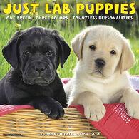 Willow Creek Press Just Lab Puppies 2020 Wall Calendar