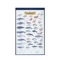 Mac's Field Guides: North American Marine Mammals By Craig MacGowan