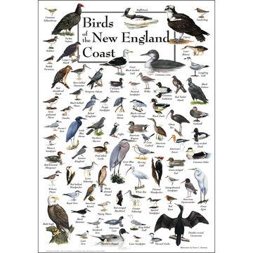 Birds of the New England Coast Poster