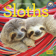 Sloths 2018 Wall Calendar by Lucy Cooke