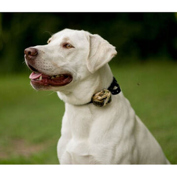 D.T. Systems Master Retriever 1100  Add-On Dog Collar