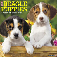 Willow Creek Press Just Beagle Puppies 2018 Wall Calendar