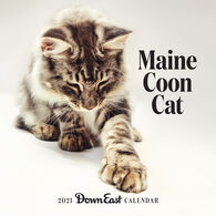 Maine Coon Cat Down East 2021 Wall Calendar by Editors of Down East