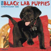 Willow Creek Press Just Black Lab Puppies 2020 Wall Calendar
