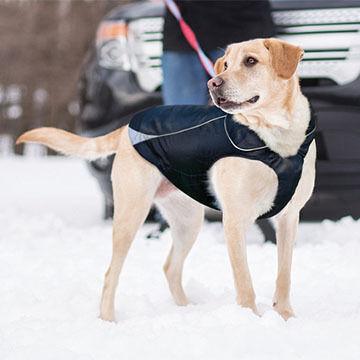 Kurgo North Country Dog Coat w/ LED Safety Light