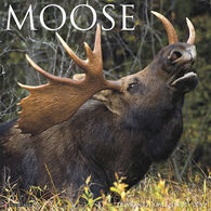 Willow Creek Press Moose 2019 Wall Calendar