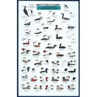 Mac's Field Guides: Northeast Coastal Water Birds by Craig MacGowan