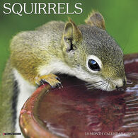 Willow Creek Press Squirrels 2018 Wall Calendar