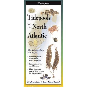 Tidepools of the North Atlantic: FoldingGuides