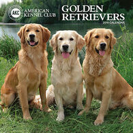 AKC Golden Retrievers 2018 Wall Calendar by Zebra Publishing