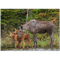 Lori A. Davis Photo Card - Moose Hug