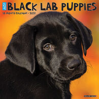 Willow Creek Press Just Black Lab Puppies 2021 Wall Calendar