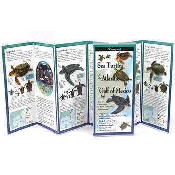 Sea Turtles of the Atlantic & Gulf of Mexico: FoldingGuides