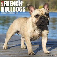 Willow Creek Press Just French Bulldogs 2020 Wall Calendar