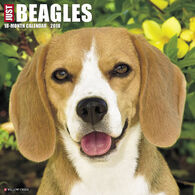 Willow Creek Press Just Beagles 2018 Wall Calendar