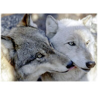 Lori A. Davis Photo Card - Kissing Wolves