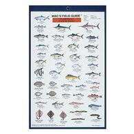 Mac's Field Guides: Northeast Coastal Fish by Craig MacGowan