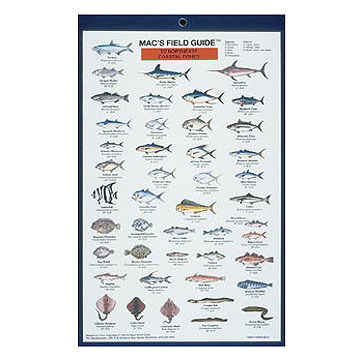Macs Field Guides: Northeast Coastal Fish by Craig MacGowan