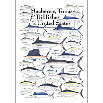 Mackerels, Tunas, and Billfishes of the United States Poster