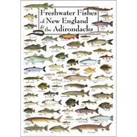 Freshwater Fishes of New England & Adirondacks Poster