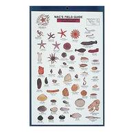 Mac's Field Guides: Northeast Coastal Invertebrates by Craig MacGowan