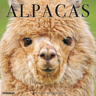 Willow Creek Press Alpacas 2019 Wall Calendar