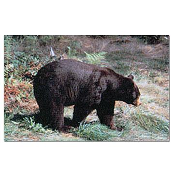 Delta Black Bear Paper Target