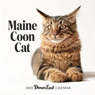 Maine Coon Cat: Down East 2022 Wall Calendar by Editors of Down East