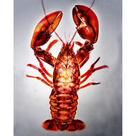 Radiant Art Red Lobster 8 x 10 Tile