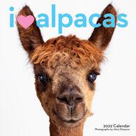 I Heart Alpacas 2022 Wall Calendar by Aliza Eliazarov