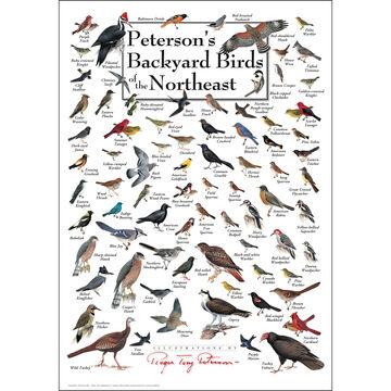 Petersons Backyard Birds of the Northeast Poster