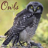 Willow Creek Press Owls 2018 Wall Calendar