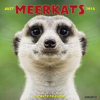 Willow Creek Press Meerkats 2018 Wall Calendar