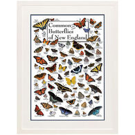 Common Butterflies of New England Poster