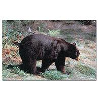 Delta McKenzie Black Bear Paper Archery Target