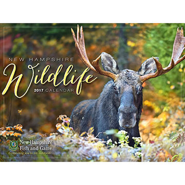 Nh fish and game wildlife 2017 wall calendar kittery for Wildlife fish and game