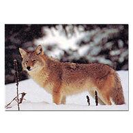 Delta Coyote Paper Target