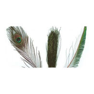 Wapsi Peacock Strung Herl Fly Tying Material