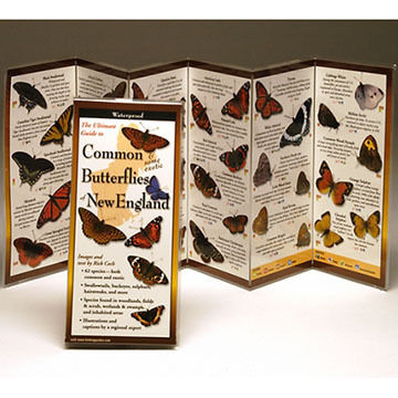 Common Butterflies of New England: FoldingGuides