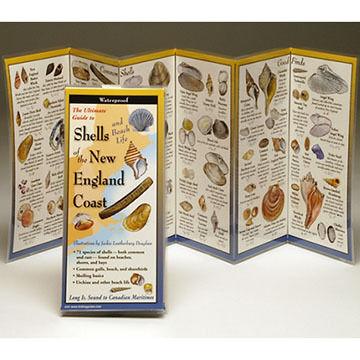 Shells and Beach Life of the New England Coast: FoldingGuides