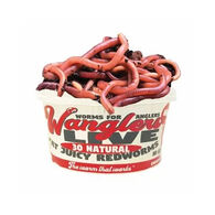 Wanglers Live Natural Redworms Bait
