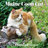 Maine Coon Cat: 2018 Down East Wall Calendar by Hillary Steinau