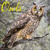 Willow Creek Press Owls 2021 Wall Calendar