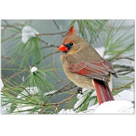 Lori A. Davis Photo Card - Female Cardinal