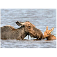 Lori A. Davis Photo Card - Cow Moose with Calf